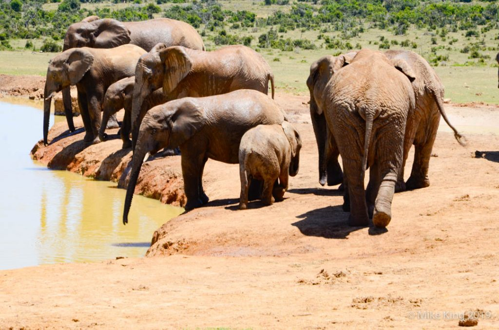 Sightings of Elephants
