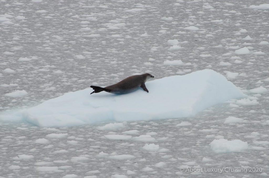 Antarctica Photography